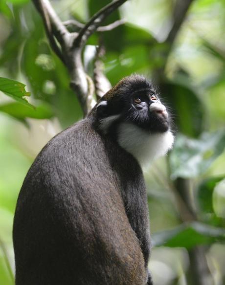 Investigating primate behavior