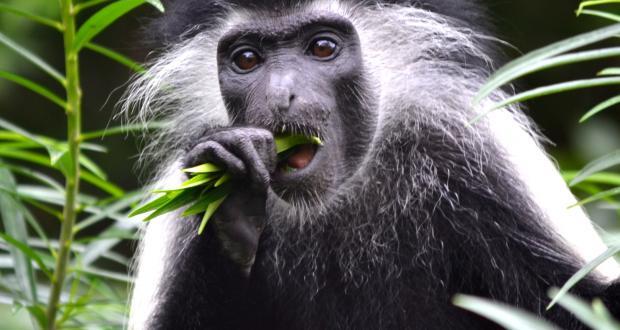 Understanding primate feeding behavior and communication