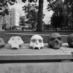 3D skulls in black and white.