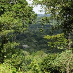 Image of African forest