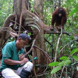 Juno Parrenas in the field studying apes