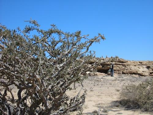 Fieldwork in Oman.