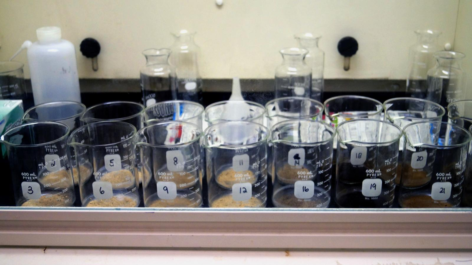 Beakers in fume hood
