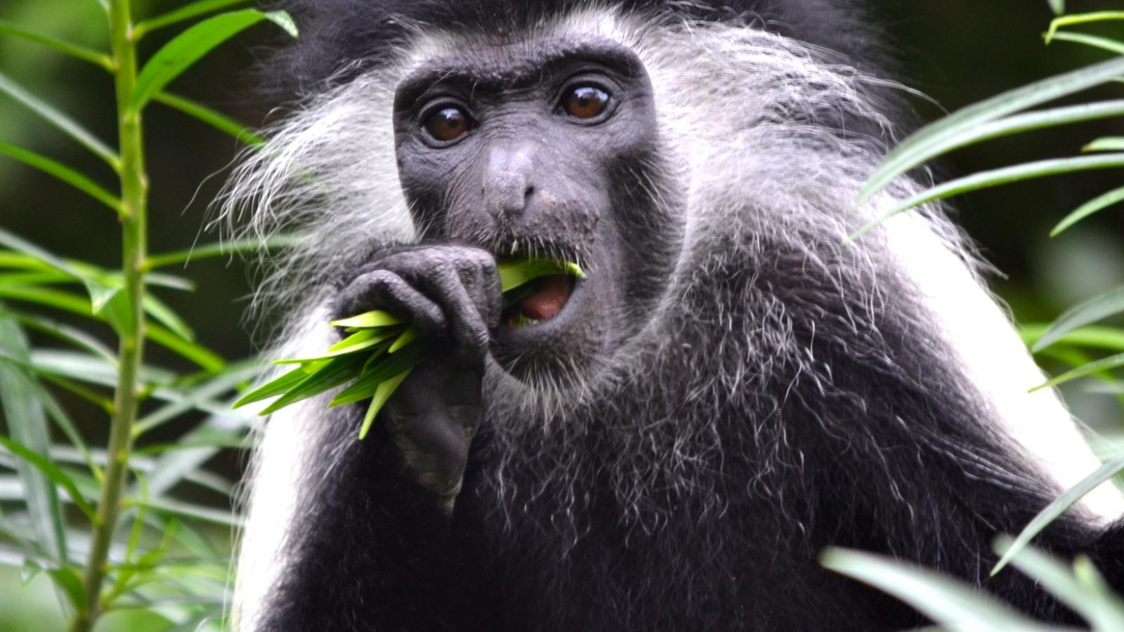 Understanding primate feeding behavior and communication