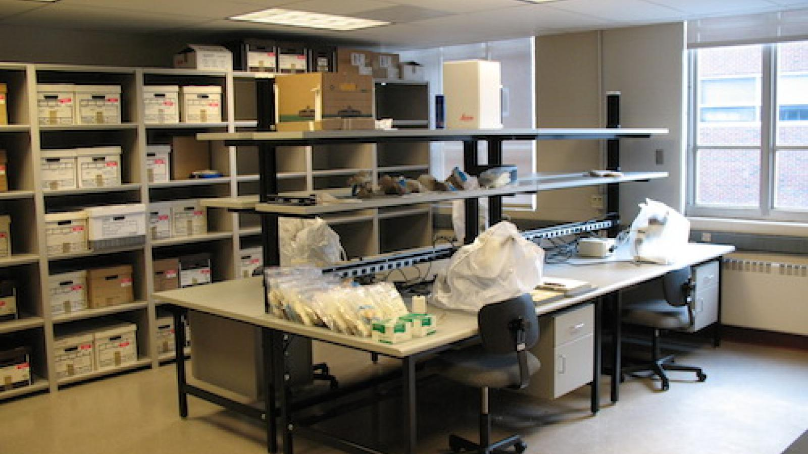 Collections and workstations in the Laboratory for Eastern North American Paleoethnobotany (LENAP)